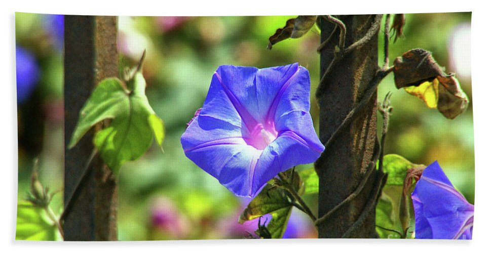Beautiful Radiating Vine Flower Beach Towel featuring the photograph Beautiful Railroad Vine Flower by Mariola Bitner