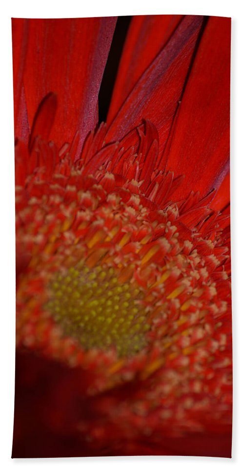 Flower Beach Towel featuring the photograph Beautiful Red by Miranda Strapason
