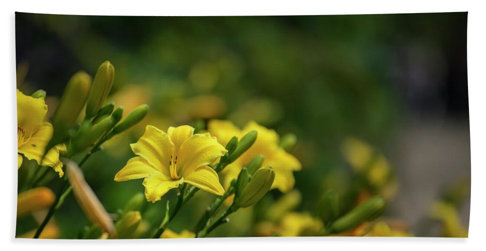Flower Beach Towel featuring the photograph Beautiful Vibrant Yellow Lily Flower In Summer Sun by Matthew Gibson
