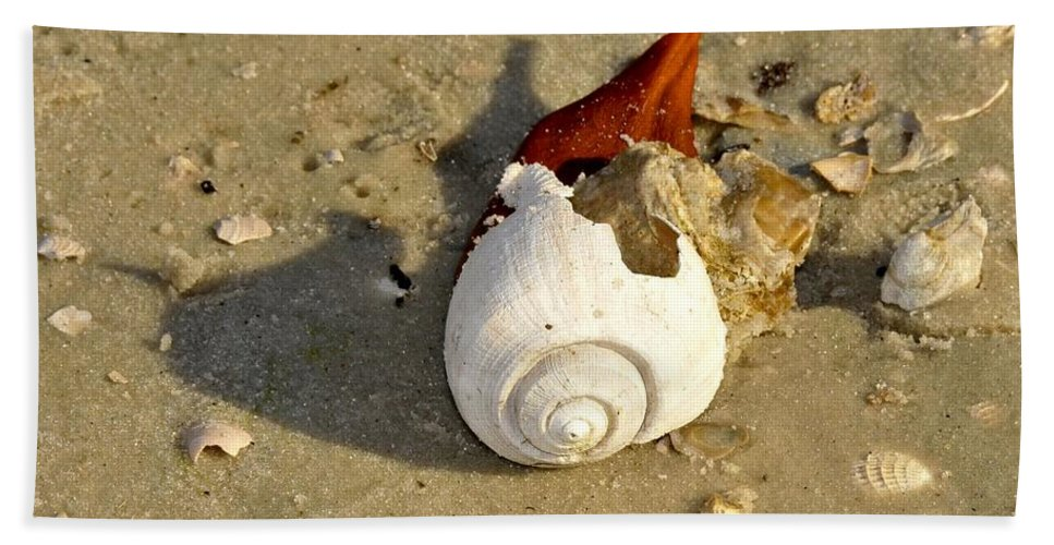 Shell Beach Towel featuring the photograph Beauty From The Sea by David Lee Thompson