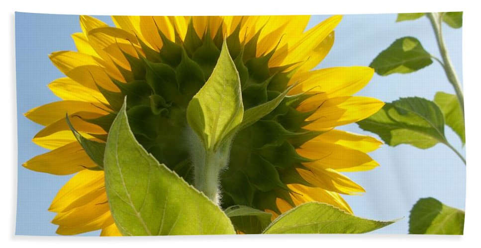 Sunflower Beach Towel featuring the photograph Beauty However You Look At It by Ann Horn