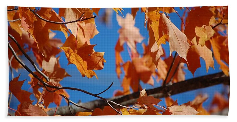 Leaves Beach Towel featuring the photograph Beauty In Nature by Robert Meanor