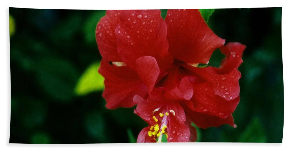 Red Flower Beach Towel featuring the photograph Beauty In The Jungle by Gary Wonning