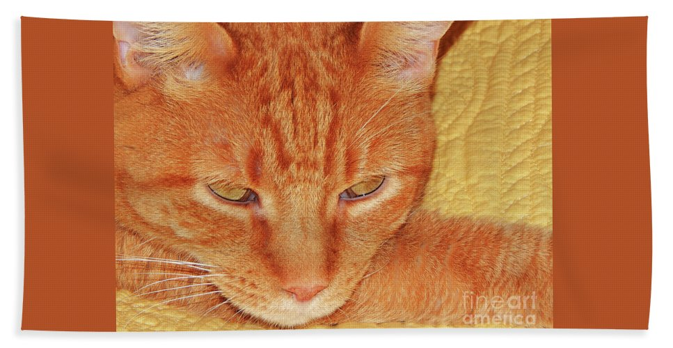 Cat Beach Towel featuring the photograph Beauty Of A Cat by Jan Gelders