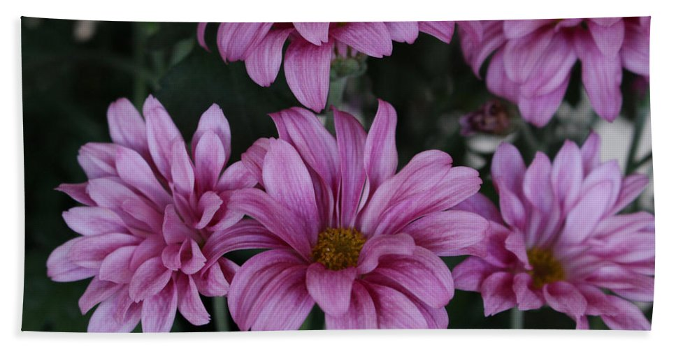 Flower Beach Towel featuring the photograph Beauty Of Pink by Brenda Mardinly