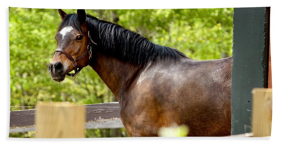 Horse Beach Towel featuring the photograph Becky by Greg Fortier