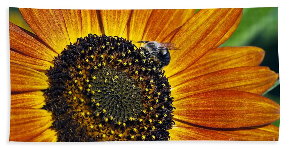 Helianthus Annuus Beach Towel featuring the photograph Bee And Sunflower. by John Greim