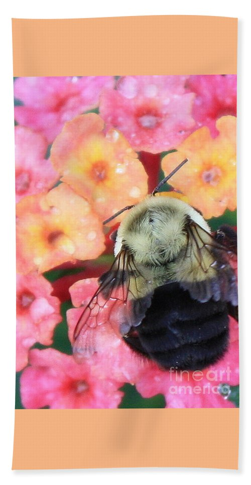 Bee Beach Towel featuring the photograph Bee Card by Carol Groenen