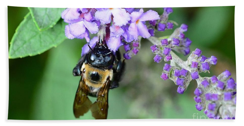 Bee Beach Towel featuring the photograph Bee-lieve by Cindy Manero