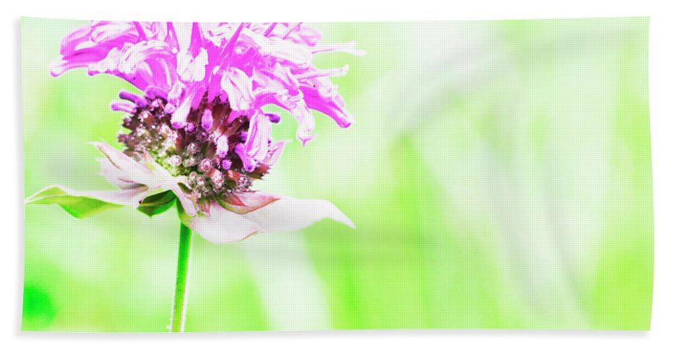 Bee Balm. Beach Towel featuring the photograph Bee Nectar by Traci Cottingham