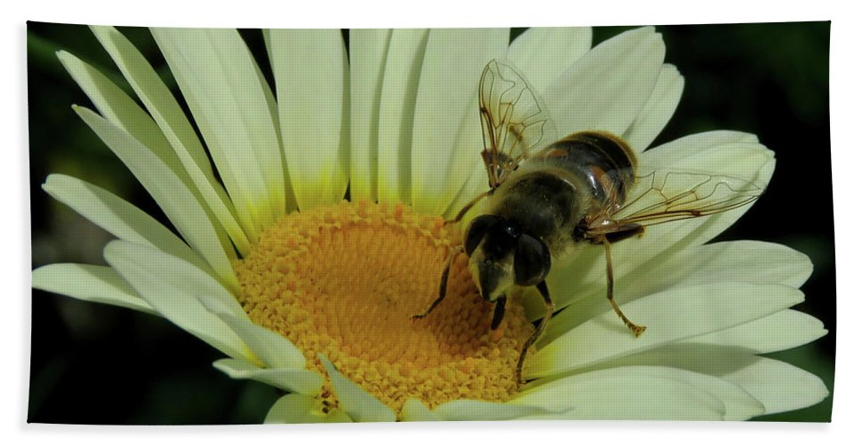Bee Beach Towel featuring the photograph Bee On A Daisy by John Topman