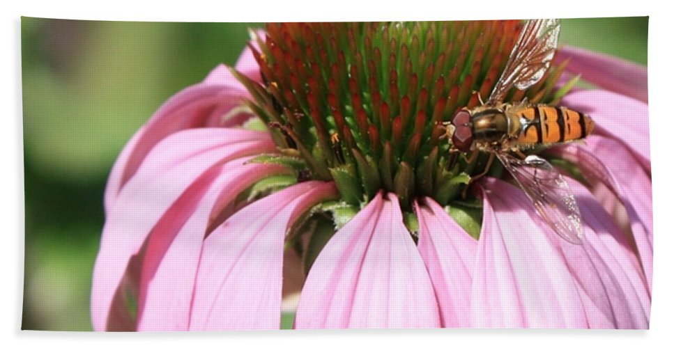 Echinacea Beach Towel featuring the photograph Bee On Echinacea by Carol Groenen