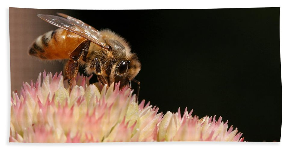 Bee Beach Towel featuring the photograph Bee On Flower 2 by Angela Rath