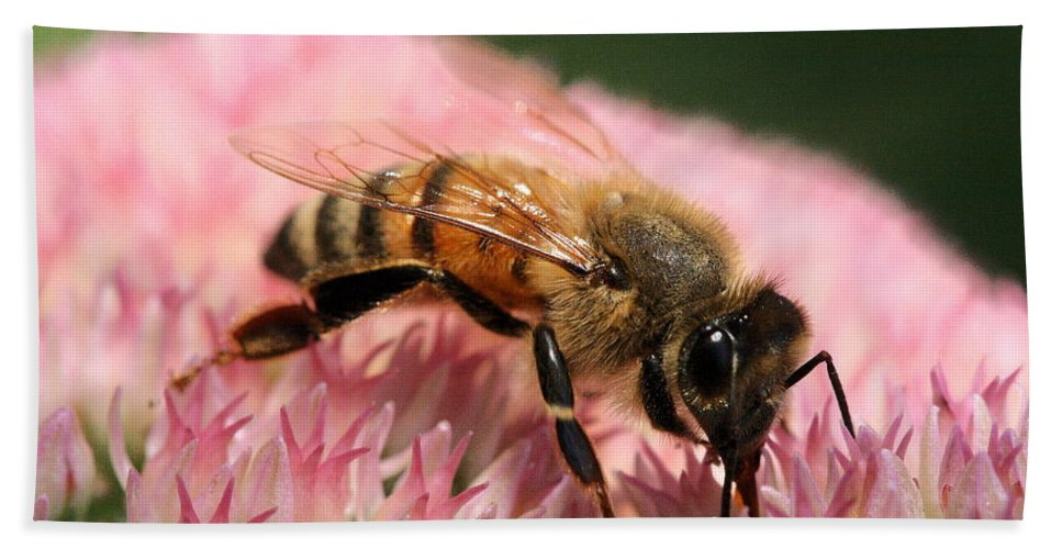 Bee Beach Towel featuring the photograph Bee On Flower 6 by Angela Rath