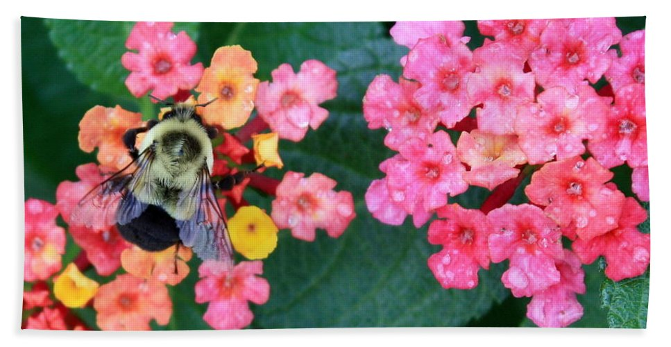 Bee Beach Towel featuring the photograph Bee On Rainy Flowers by Carol Groenen