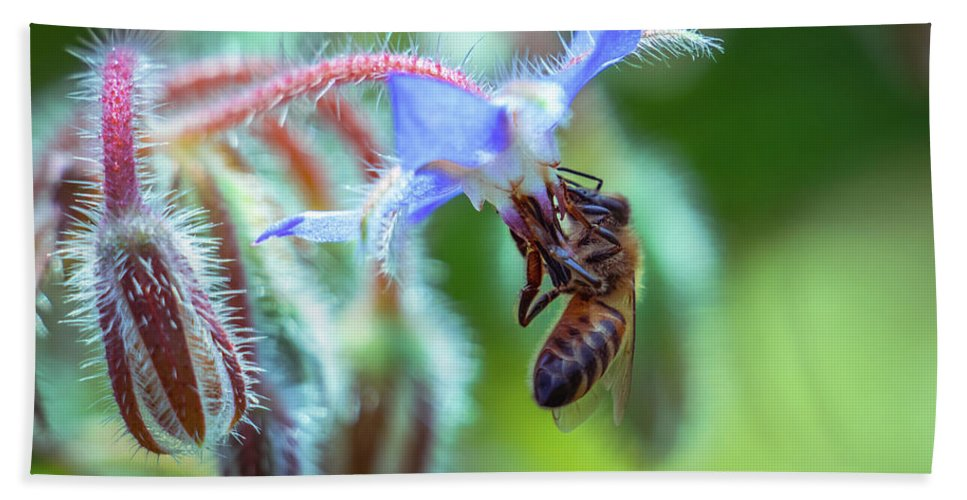 Bee Beach Towel featuring the photograph Bee On The Flower 2 by Lilia D