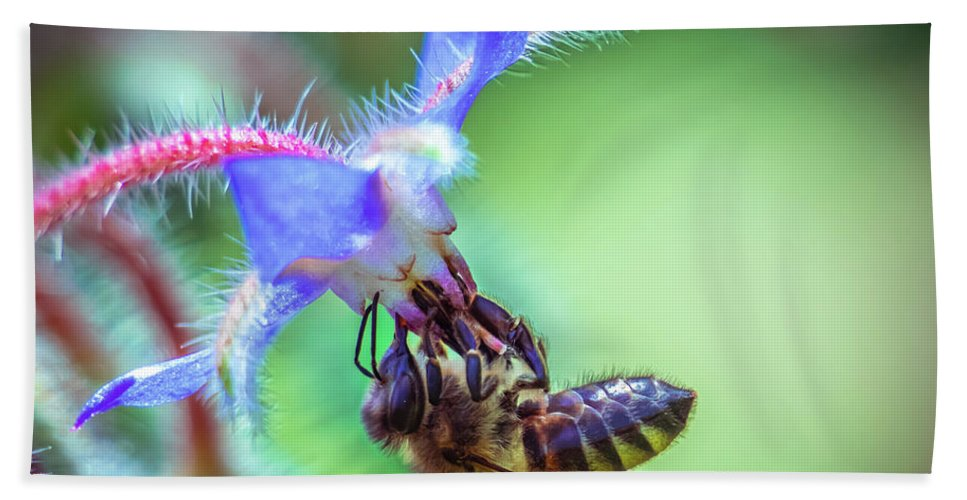 Bee Beach Towel featuring the photograph Bee On The Flower by Lilia D