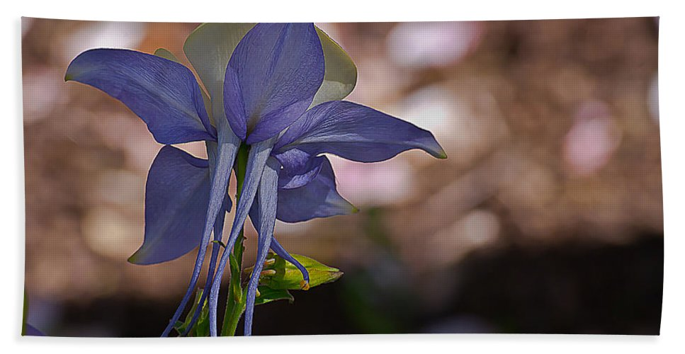 Aquilegia Beach Towel featuring the photograph Behind Columbine by Emerald Studio Photography
