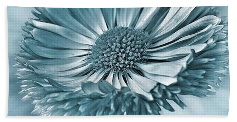 Beautiful Beach Towel featuring the photograph Bellis In Cyan  #flower #flowers by John Edwards