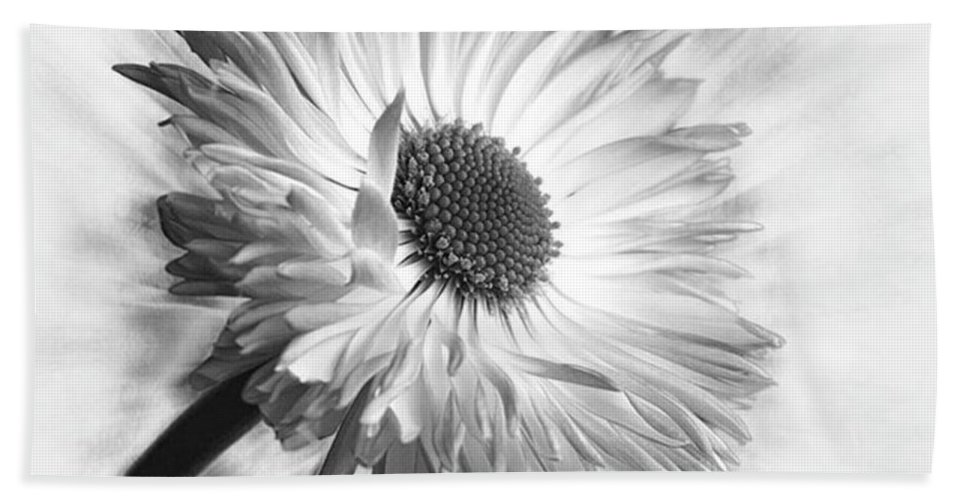 Beautiful Beach Towel featuring the photograph Bellis In Mono  #flower #flowers by John Edwards