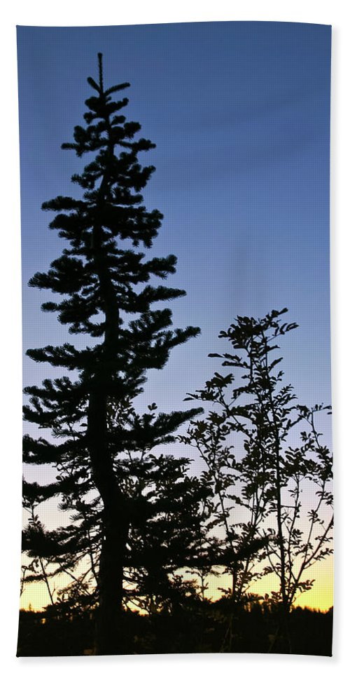 Tree Beach Towel featuring the photograph Bent Conifer by Albert Seger