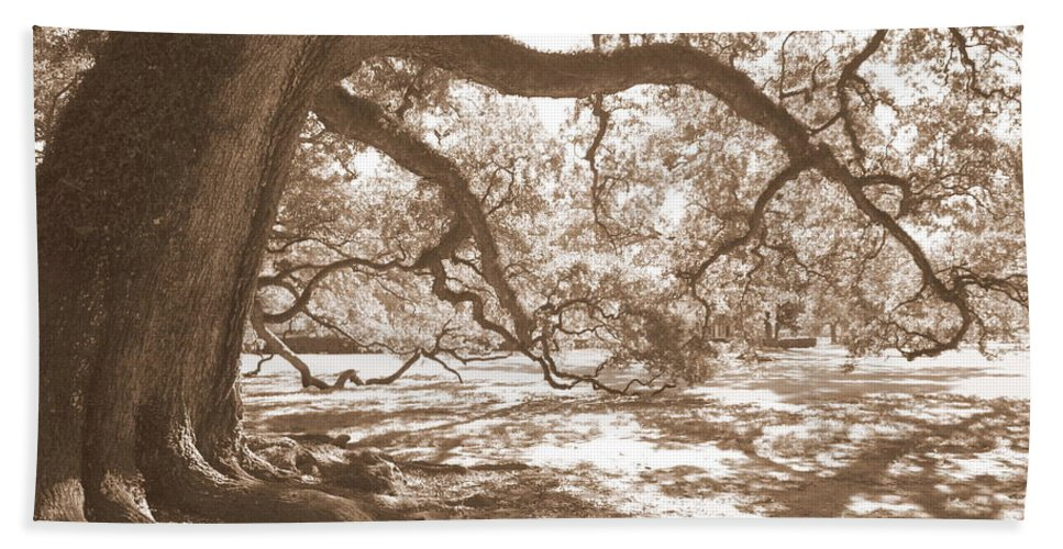 Live Oak Beach Towel featuring the photograph Bent Tree by Carol Groenen
