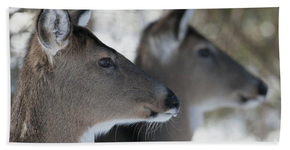 Deer Beach Towel featuring the photograph Best Friends by Sandra Bronstein