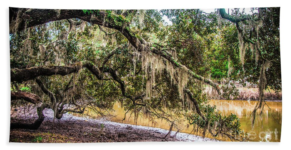 Bethany Beach Towel featuring the photograph Bethany Cemetery Oaks And Tidal Creek by Yvette Wilson