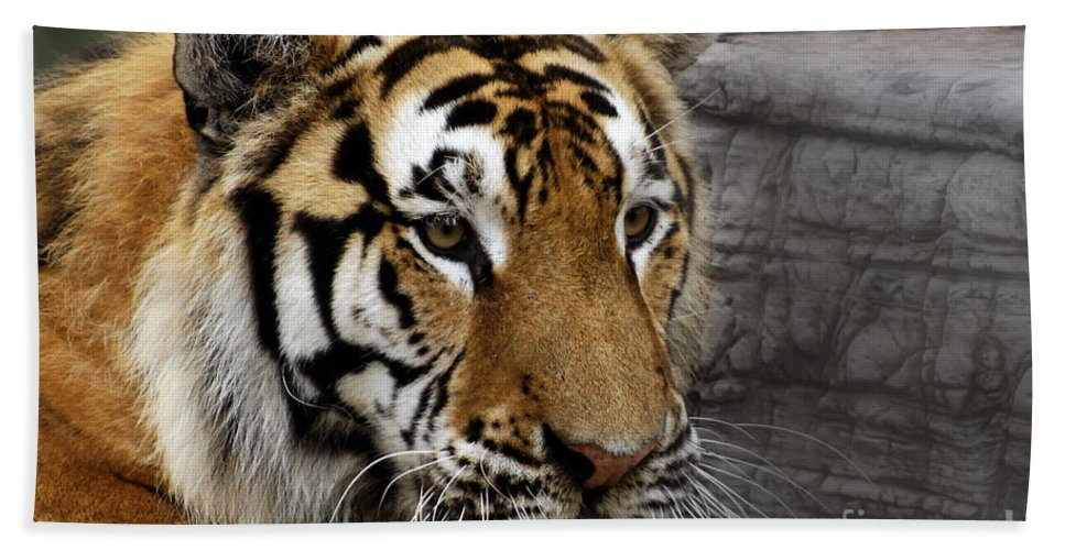 Tiger Beach Towel featuring the photograph Big Cats 78 by Ben Yassa