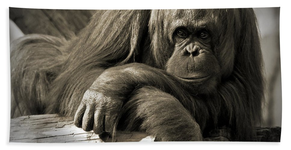 Orangutang Beach Towel featuring the photograph Big Hands II by Steven Sparks