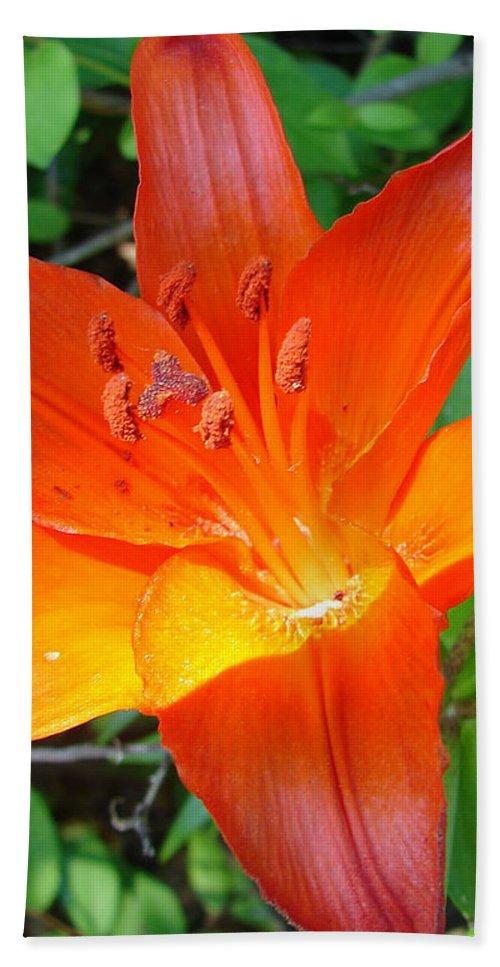 Orange Flower Yellow Beach Towel featuring the photograph Big Orange by Luciana Seymour