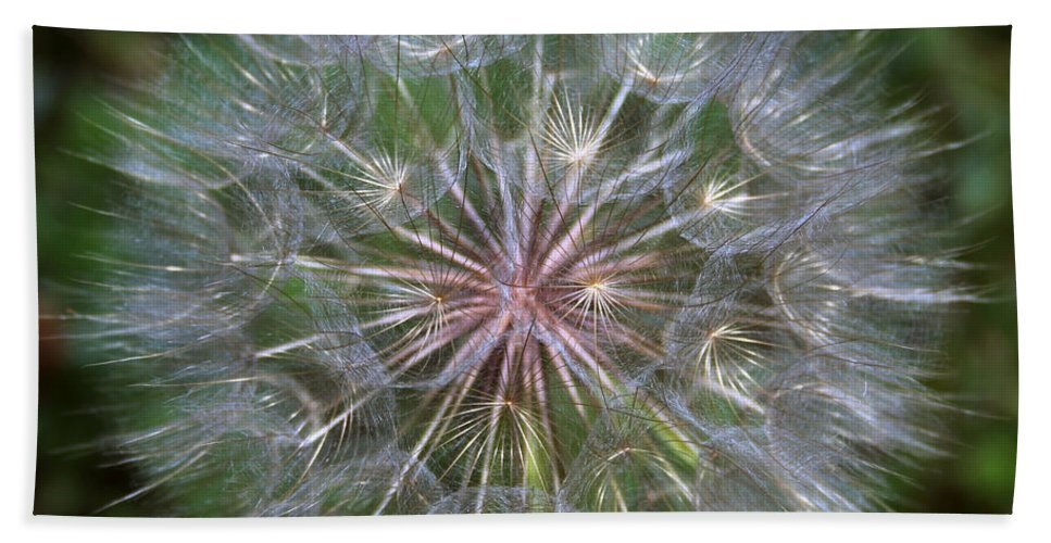 Dandelion Beach Towel featuring the photograph Big Wish by Linda Sannuti