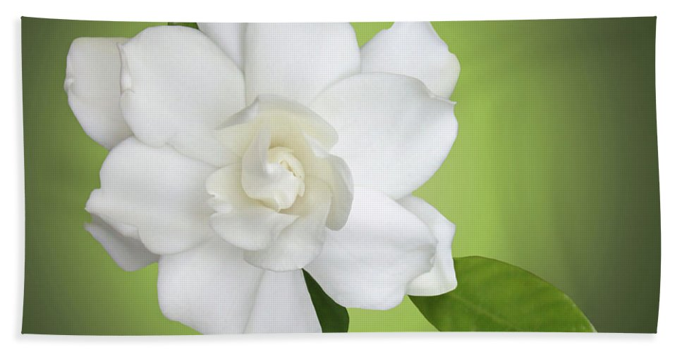 Gardenia Beach Towel featuring the photograph Billie's Flower by Kristin Elmquist
