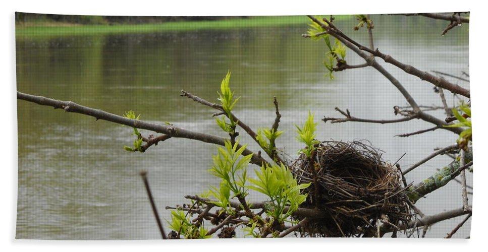 Nest Beach Towel featuring the photograph Bird Nest In Ash Tree Branches by Kent Lorentzen