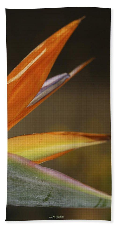 Flower Beach Towel featuring the photograph Bird Of Paradise by Deborah Benoit