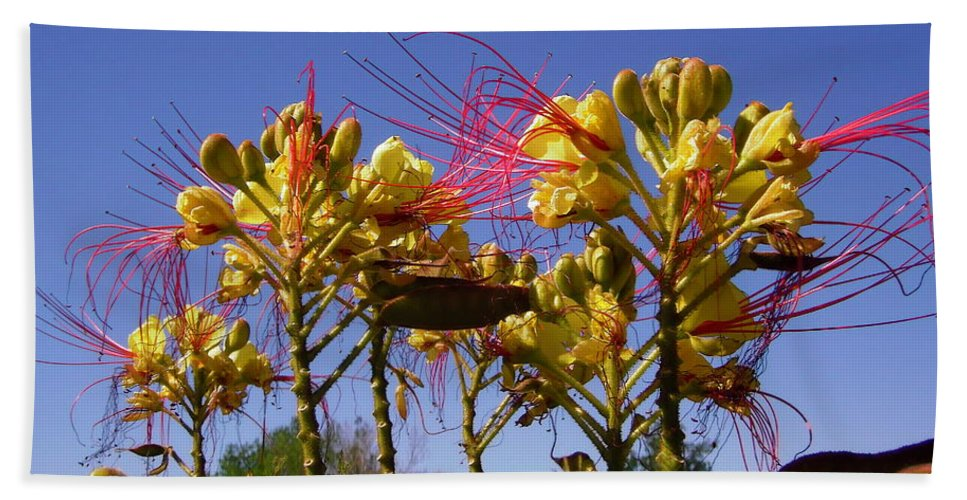 Flowers Beach Towel featuring the photograph Bird Of Paradise Shrub by Stephanie Moore