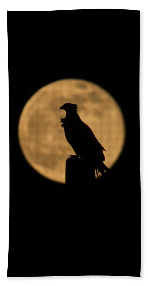 Moon Beach Towel featuring the photograph Bird Silhouette by Zina Stromberg