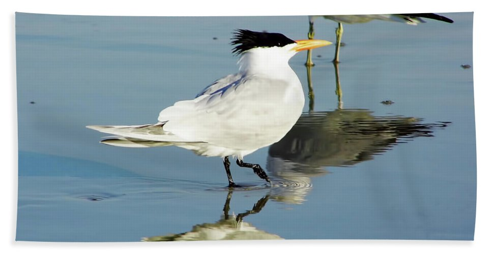 Tern Beach Towel featuring the photograph Bird - Tern - Reflection by D Hackett