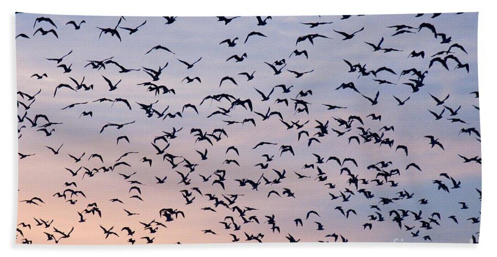 Numerous Beach Towel featuring the photograph Birds A Flock Of Seagulls by John Harmon