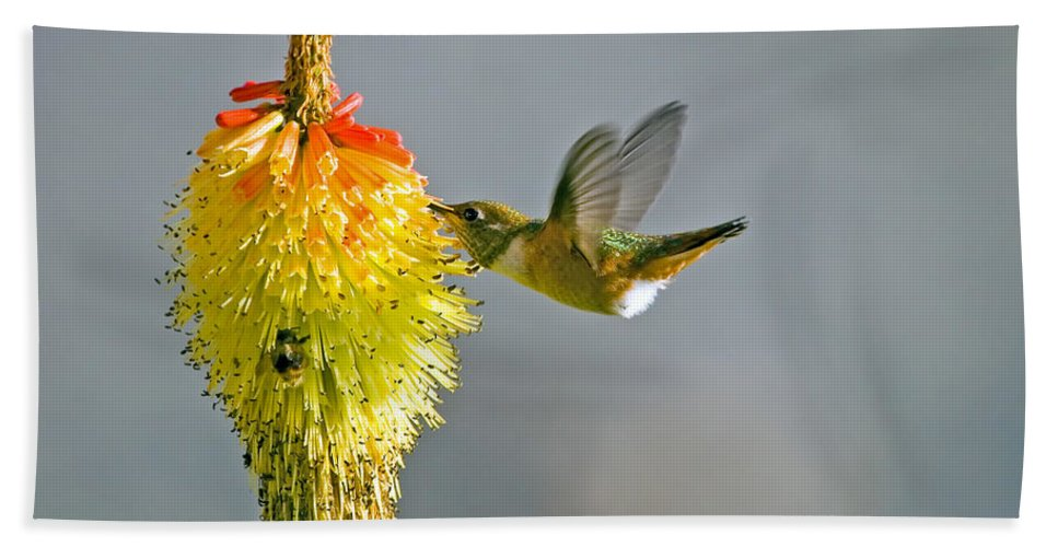 Hummingbird Beach Sheet featuring the photograph Birds And Bees by Mike Dawson