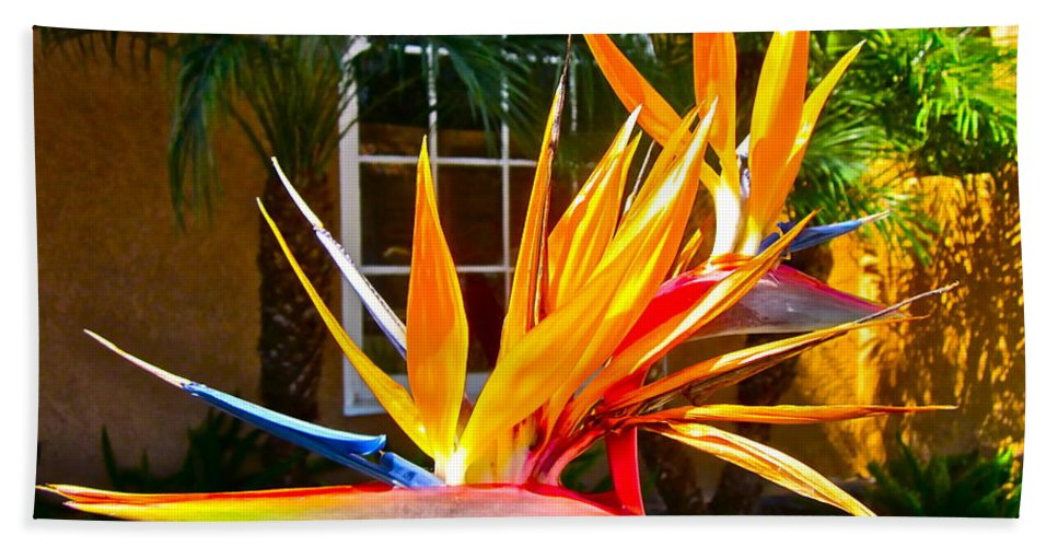 Photograph Of Bird Of Paradise Beach Towel featuring the photograph Birds In Paradise by Gwyn Newcombe
