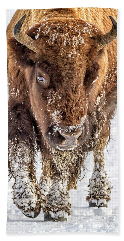 Yellowstone Beach Towel featuring the photograph Bison Approaching 8163 by Karen Celella