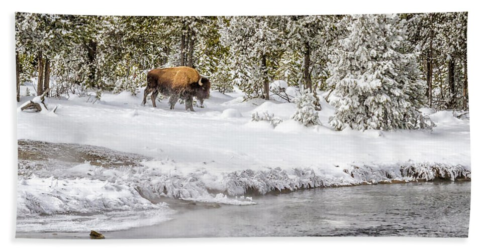 Yellowstone Beach Towel featuring the photograph Bison Country 8101 by Karen Celella