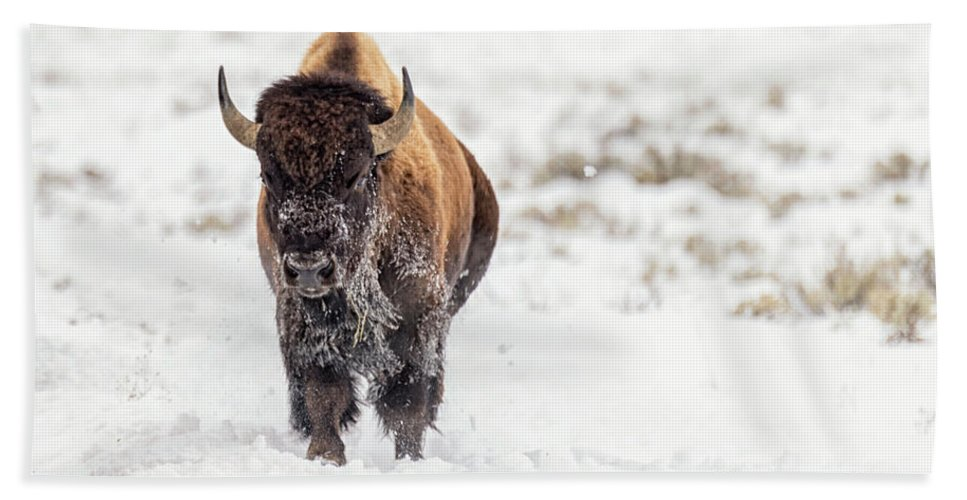 Buffalo Beach Towel featuring the photograph Bison In Snow by Stacy White