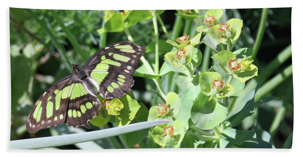 Butterfly Beach Towel featuring the photograph Black And Green Butterfly by Kelly Holm