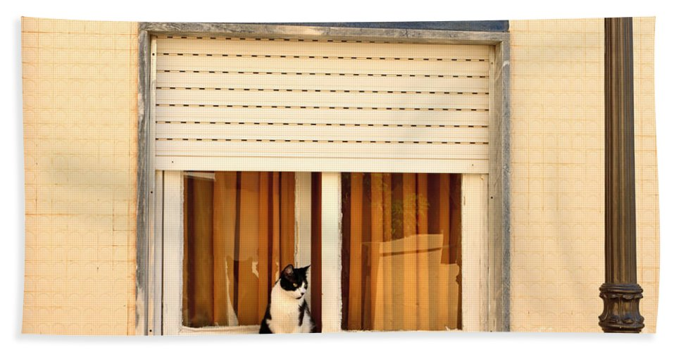 Cat Beach Towel featuring the photograph Black And White Cat On The Windowsill by Louise Heusinkveld