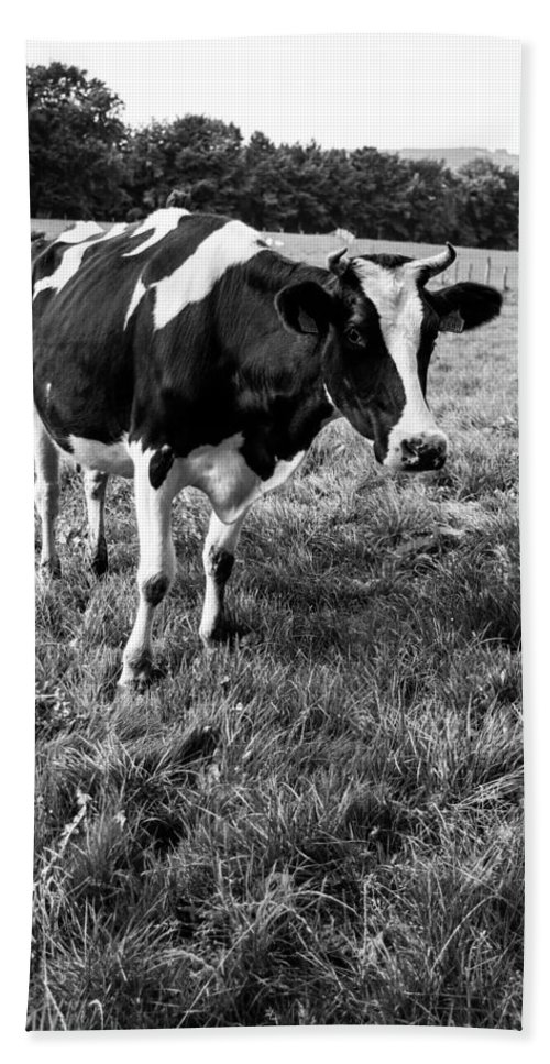 Black Beach Towel featuring the photograph Black And White Cow by Pati Photography