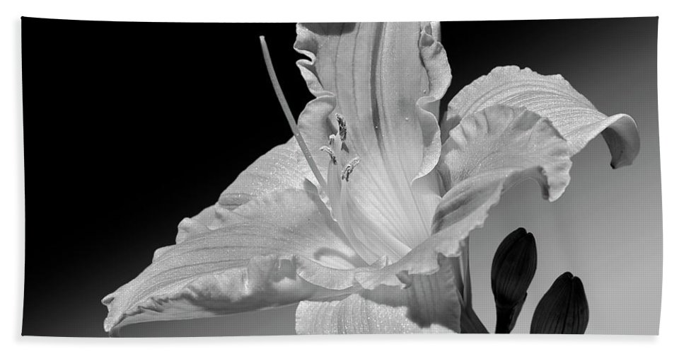 Daylily Beach Towel featuring the photograph Black And White Daylily by Phyllis Denton