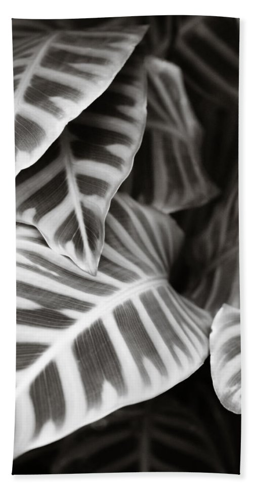 Black Beach Towel featuring the photograph Black And White Leaves by Marilyn Hunt