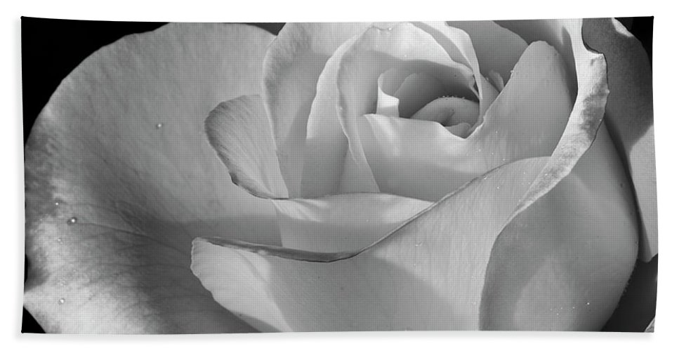 Rose Beach Towel featuring the photograph Black And White Rose by Phyllis Denton
